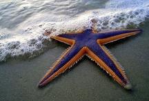 Starfish / by Linda Langevin