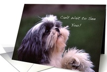 Shih Tzu Love / Greeting Cards for a variety of occasions featuring the beloved Shih Tzu dog.  Originally from China and older reports originating from Tibet, this breed is also known as the small lion.
