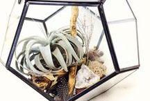 Terrarium / by Conservatorie Floral