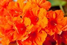 orange / by Sandi Davis