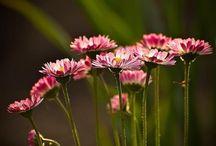 Floristik / by Kerstin Beer