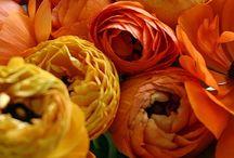 Flowers et al / by Lauren Codes