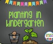 Planting in Kindergarten / Here are some of my favorite ideas for planting and gardening in the classroom. It is so much fun to watch the faces of the children as the plants begin to grow! Follow this board for some science fun.
