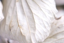 Whisper / Whispers of white, ivory, airy breezes, light as air....