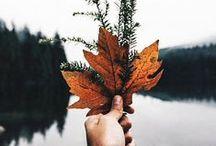 f a l l / autumn + halloween