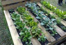 Gardening Ideas / by Yvonne Schaffer