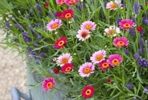 Garden / Gardening, gardens, hints and tips, beautiful images of flowers, plants and outdoor spaces: please feel free to add yours too! #gardens http://bit.ly/r1zkKD