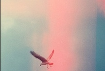 Neverland / #Neverland, #Naif