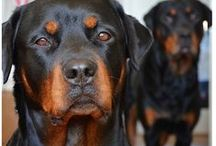 Black & Tan / by Denver Realtor | Olivia Maddox