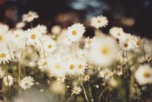 In the Garden / by Maggie Schollaert