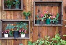 In the garden / by Stephanie Vislosky Lukes