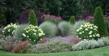 Gardening & Landscaping / Gardening and landscaping inspiration.