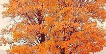 Fall - Autumn / Seasonal
