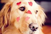 LOVE DOGS / by Olivia Bonelli