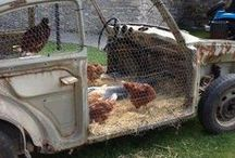chickens & Ducks / by Lyn Muddle