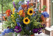 Flower Market / Campo di Fiori / Flowers, etc.