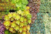 Succulents / by Amanda Livesay