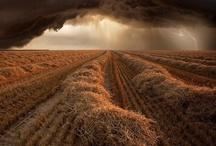 Agriculture / by Guillermo Maldonado