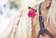 Horses / by Alejandra Berrio Londoño