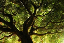 Trees / by Guillermo Maldonado