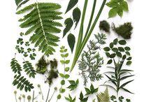 Botanical / pretty plants, beautiful blossoms and fantastic foliage