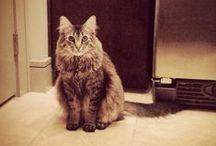 mochi  / a list of Mochi the kitten's favorite things. / by myra kohn