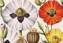 botanical illustration / Weird and wonderful botanical illustration