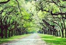 Savannah, GA / by kristalamb
