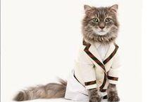 Gatos Intelectuales / Estos son los gatos que lucen camisa y corbata, ellos lucen muy intelectuales y seguro te sacaran una sonrisa.
