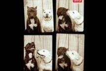 Fotomatón / Increíbles imágenes de perros que se tomaron dentro de una fotomatón te sacarán una sonrisa. Mira cómo fueron sus fotografías de estos curiosos canes.