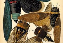 beasties + creepy crawlies / gorgeous detailed illustration of animals and insects