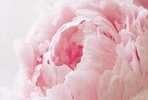Things I Love / by Krisztina Schuszter