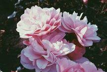 b l u m e  N  b l u e s / Flowers