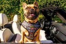 Accessories and gadgets for pets and their owners / Our pick of the best gadgets, beds and accessories for your pets...