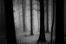 Fairytale Forests..... / .....& whispering woods.