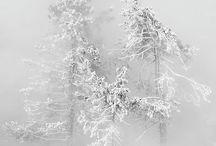 Winter wonderousness..... / .....& frosty fabulousness
