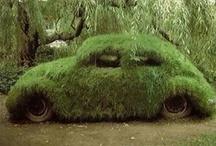 Green Grass / by Rebecca Price