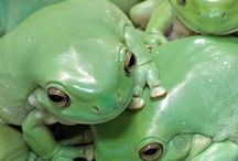 S2 (Frogs)