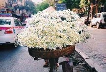 Flowers / by Elisabeth S