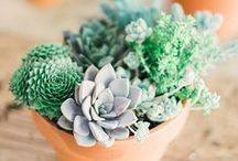 {let your garden grow} / Gardening ideas and pretty plants.