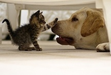 Awwww.... / Photos so sweet you have to 'squee' / by Caisue's Photography