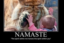 Yoga Animals / Animals know just what to do to feel good. / by Caisue's Photography