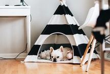 Para pets / Casinha, caminha, alimentos, brinquedos e tudo que seu animalzinho precisa