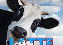 Latticini - Homemade dairy prod.