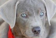 Adorable Pups / by Kallie Webre