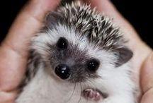 Hedgehog / by Trisha Fullmer