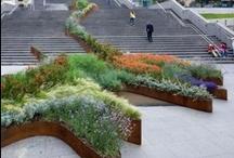 landscaping: plants / by Julia Bieler
