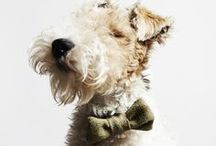 Furry Friends / by Coldwell Banker Heritage Realtors