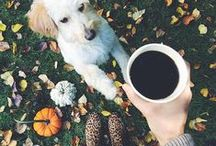 For the Fall / Our favorite things about the fall season / by Saxbys Coffee