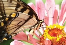 "Butterfly ""Nectar"" Plants"
